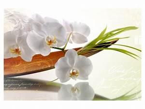 Schöne Orchideen Bilder : stilvolles bild mit orchideen f r wohn und schlafr ume ~ Orissabook.com Haus und Dekorationen