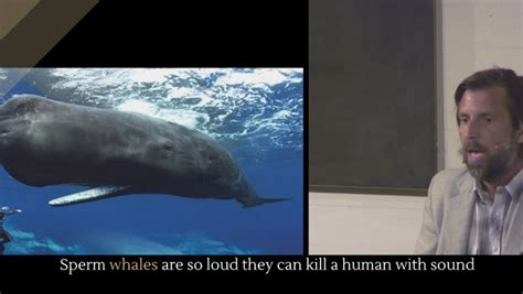 kill sperm sound human whales loud alltop viral they josh taylor november posted