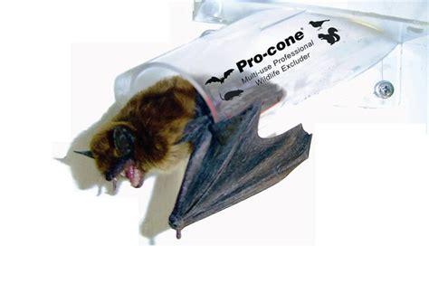 electronic fence batcone wildlife excluders nixalite