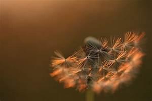 Pusteblume Schwarz Weiß Vögel : abend pusteblume forum f r naturfotografen ~ Orissabook.com Haus und Dekorationen