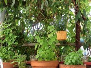 Gasgrill Auf überdachten Balkon Erlaubt : mieterinnen mieterverband was ist auf dem balkon erlaubt ~ Orissabook.com Haus und Dekorationen