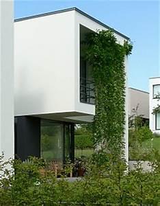 Hopfen Im Kübel Pflanzen : sichtschutz mit kletterpflanzen und begr nung ~ Markanthonyermac.com Haus und Dekorationen