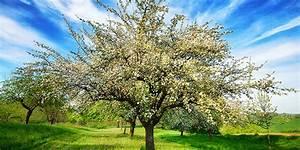 Dünger Für Obstbäume : obstb ume pflanzen pflanzabstand und pflanzzeit f r ~ Michelbontemps.com Haus und Dekorationen