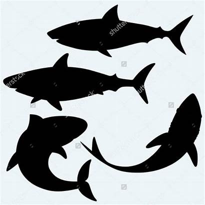Shark Vector Silhouette Silhouettes Clip Isolated Background