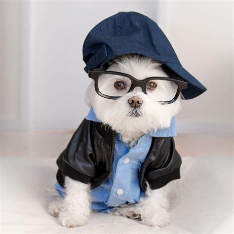 hipster dog named toby   ryan gosling  dogs
