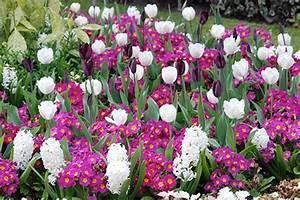Tulpen Im Topf In Der Wohnung : fr hlingsblumen pflanzen tolle kombinationen ~ Buech-reservation.com Haus und Dekorationen