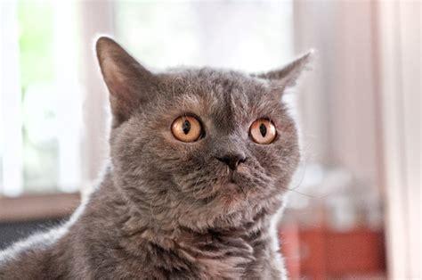 cat scared cats scaredy bananas dr shy becker banana afraid ways karen friends vet feline friendly tips visit irene