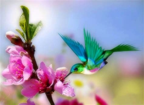 Pretty Animal Wallpaper - pretty hummingbird birds animals background wallpapers
