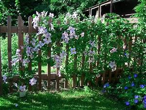 Schnell Rankende Pflanzen : kletterpflanzen als sichtschutz kletterpflanzen f r den sichtschutz diese kommen infrage ~ Frokenaadalensverden.com Haus und Dekorationen