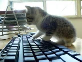 file cat keyboard jpg wikimedia commons