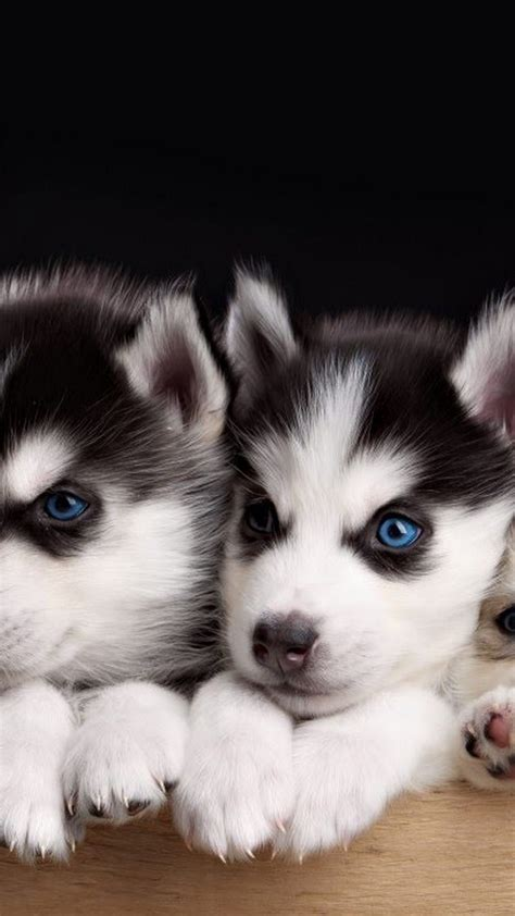 Wallpapercave is an online community of desktop wallpapers enthusiasts. iPhone Wallpaper Cute Puppies | 2020 3D iPhone Wallpaper