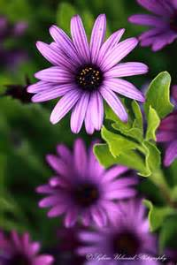 Purple Love Flowers
