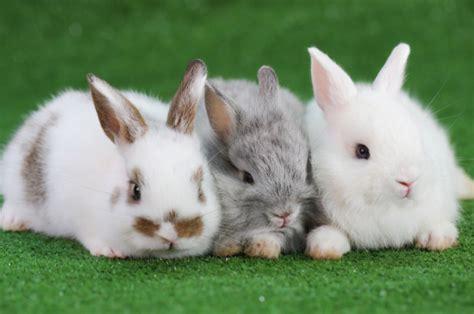 poland tells shrinking population  multiply  rabbits