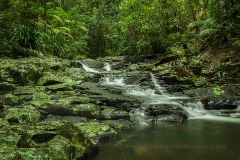 rainforest waterfall picture   hd desktop wallpaper