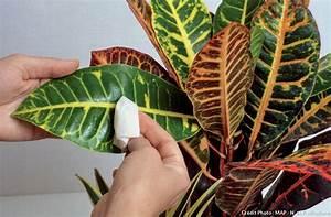 Plante Verte D Appartement : lovely plante verte d appartement 13 nettoyer ses ~ Premium-room.com Idées de Décoration