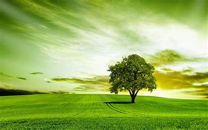 Tree Nature Sky Wallpapers Wallpaperup