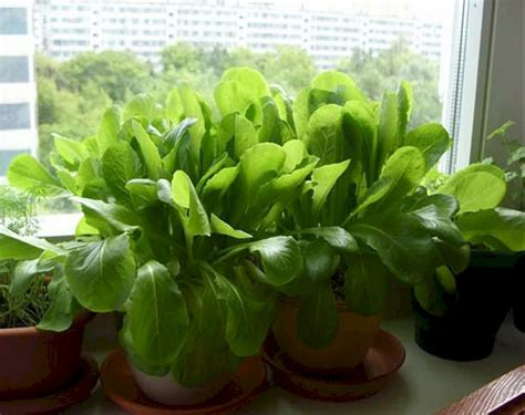 best 20 indoor herb garden for apartments how to care for