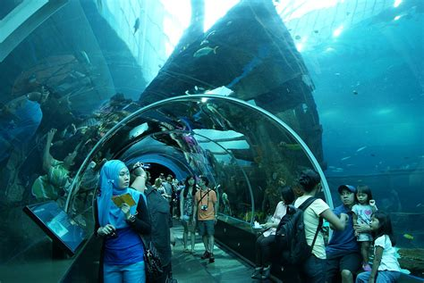 şəkil s e a aquarium marine park resorts world sentosa singapore 20130105 05 jpg