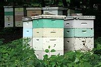 beehive wikipedia