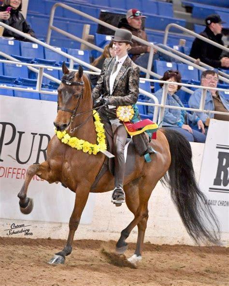 horse barker emily horses selling social courtesy