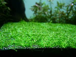 My Journey Of Keeping Planted Tanks  Riccia On Ss Mesh