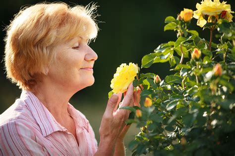 smelly roses healing pathways psychological services stop and smell the roses what is mindfulness anyway