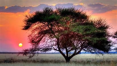 Kalahari Desert Sun Sunset Wallpapers Tree Africa