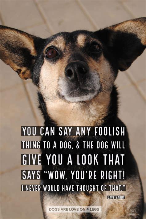 dog quote     foolish    dog dog