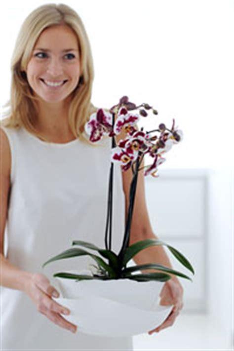 comment garder une orchidee en pot 28 images comment garder une orchidee en pot sedgu
