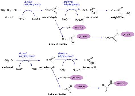 what metabolic by product from hemoglobin colors the urine yellow organic biochemistry nutrition richard david feinman