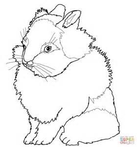 Lionhead Rabbit Coloring Page