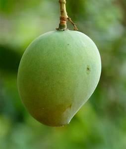 Honey: The Simple Solution to Mango Rash – Kim Steutermann ...