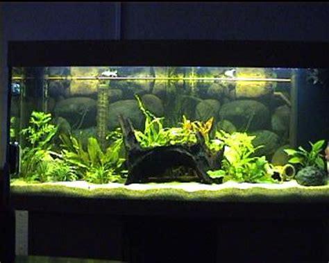 comment faire un aquarium plante home bricolages d 233 coration et maison septembre 2011