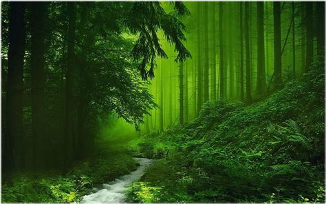 Green Forest Photo Hd by Green Scenery Of River Forest Wallpaper Green Scenery Of