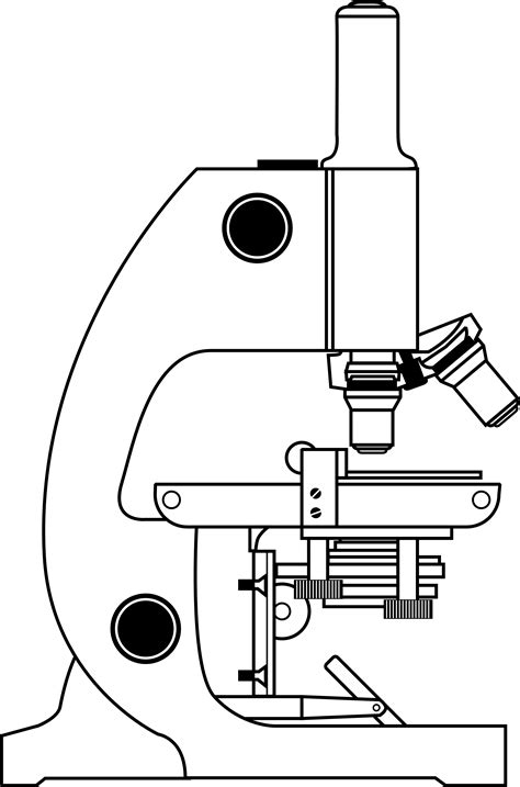 Compound Light Microscope Diagram by Microscope Clipart Best