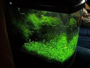 Mein Foto Xxl : mein sera biotop cube 130 xxl seite 4 aquarium forum ~ Orissabook.com Haus und Dekorationen