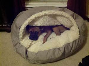 covered dog beds small dogs best images collections hd With small dog covered beds