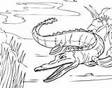 Coloring Alligator Pages River Nile Printable Crocodile Print Getdrawings Getcoloringpages Bestcoloringpagesforkids sketch template