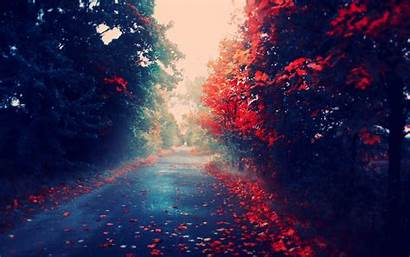 Leaves Nature Autumn Mac Desktop Wallpapers Fall