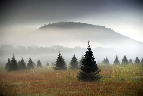 piper mountain christmas tree farm for sale s real tree sales set to launch for 2018 holidays nj