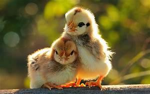 Cute Baby Animal Wallpapers | PixelsTalk.Net  Animal