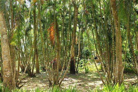garden bamboo bamboo garden free stock photo public domain pictures