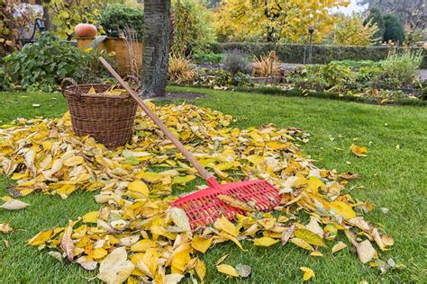Fall Leaves For Your Garden  Kellogg Garden Products