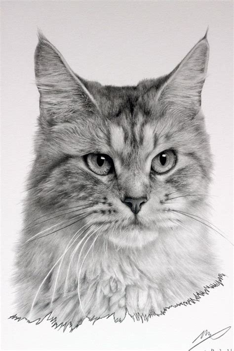 Cat Drawing By Sharppower On Deviantart