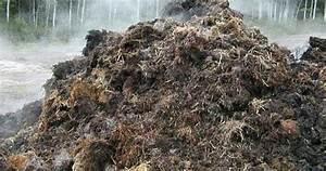 Was Kann Man Im Gewächshaus Anbauen : champignons selber anbauen champignonanbau mit pferdedung ~ A.2002-acura-tl-radio.info Haus und Dekorationen