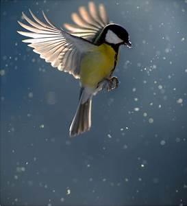 The 25+ best ideas about Birds In Flight on Pinterest ...