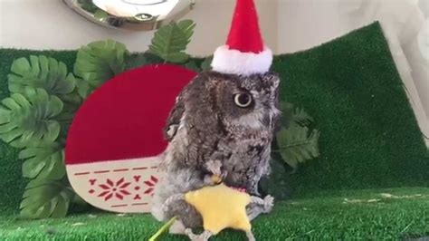 owl merry christmas youtube