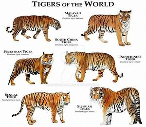 Types Of Tigers