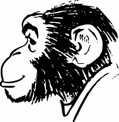 Monkey Head Clipart Monyet Drawing Svg Gambar