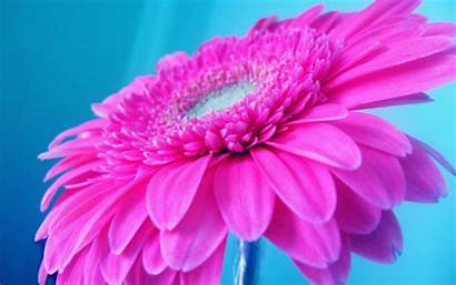 Pink Bright Wallpapers Flowers Flower Background Neon